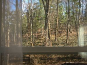 View From Upper Suite Serenity - The Woods in Spring