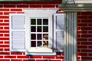 On Guard - Chippie Chipmunk protecting his home at Port Franks Getaway in Ontario, Canada. How adorable?
