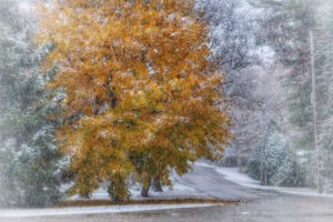 Golden Autumn with a Dusting of Snow, Port Franks Getaway, Ontario, Canada