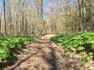Magnificent Spring Hiking - one of several trails in Port Franks offering varying difficulty levels