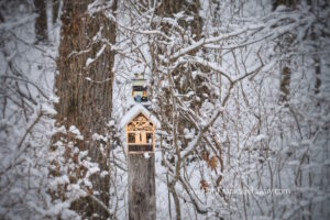 A Butterfly House and a bird haven shaped like a light house covered with snow - Port Franks Getaway